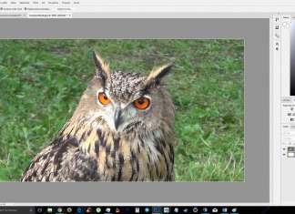 scontornare Immagini con Photoshop ritaglio